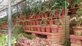 Tipi differenti di cactus fotografie stock libere da diritti