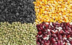 Tipi differenti di cereali e di legumi, fotografia stock libera da diritti
