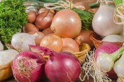 Tipi differenti di cipolle, di aglio e di scalogni Fotografie Stock