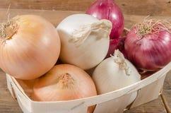Tipi differenti di cipolle in un canestro fotografia stock libera da diritti