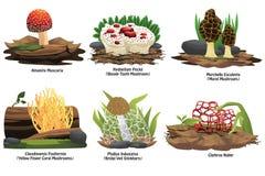 Tipi differenti di funghi Fotografia Stock Libera da Diritti