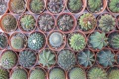 Tipi differenti di piante del cactus in vaso Fotografie Stock Libere da Diritti