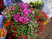 Tipi differenti di rose di Hong Kong Immagini Stock