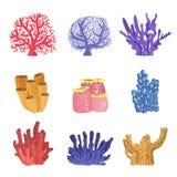 Tipi differenti di scogliere tropicali Coral Collection Immagine Stock