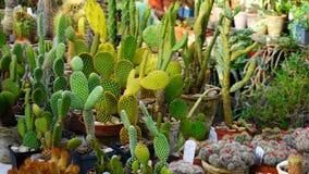 Tipi differenti di supporti dei cactus sul contatore Immagine Stock