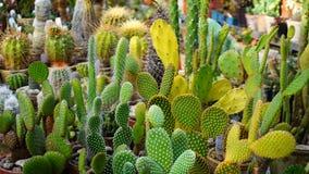 Tipi differenti di supporti dei cactus sul contatore Fotografia Stock