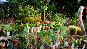 Tipi differenti di supporti dei cactus sul contatore Fotografia Stock Libera da Diritti