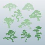 Tipi differenti di vettori degli alberi Immagini Stock