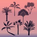 Tipi differenti di vettori delle palme Immagine Stock