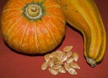 Tipi differenti di zucche con i semi Fotografie Stock