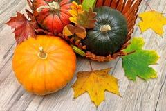 Tipi differenti di zucche e di foglie di autunno su una tavola di legno Fotografie Stock Libere da Diritti