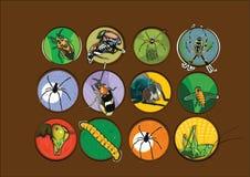 Tipi differenti vettore dell'illustrazione degli insetti Fotografie Stock Libere da Diritti