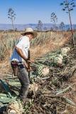 Tipical Jimador mężczyzna działanie Fotografia Royalty Free