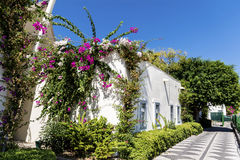 Typical turkish  street with white house and bougainvillea flower Stock Photo