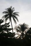 Tipicamente tropical Imagens de Stock