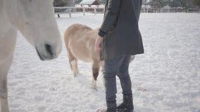 Tipo barbuto bello in vetri che portano un cappotto che segna i cavalli e cavallino su un ranch del paese I cavalli camminano all video d archivio