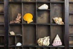 Tipo caso com escudos do mar imagens de stock