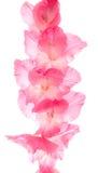 Tipo de flor Imagens de Stock