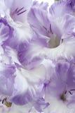 Tipo de flor Foto de Stock