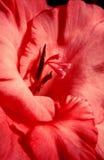 Tipo de flor. Imagem de Stock