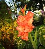 Tipo de flor bonito no alvorecer Imagem de Stock