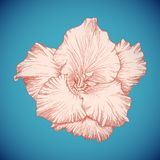 Tipo de flor colorido vetor Foto de Stock