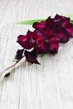Tipo de flor marrom bonito Foto de Stock