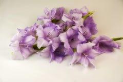 Tipo de flor roxo no fundo branco Fotos de Stock