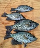 Tipo de peixe dos peixes de água fresca indicado na placa de madeira Foto de Stock