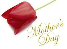 Tipo del día de madres con el tulipán Fotografía de archivo