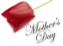 Tipo di giorno di madri con il tulipano Immagini Stock Libere da Diritti