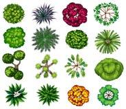 Tipo diferente das plantas Imagem de Stock