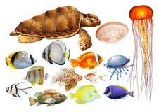 Tipo diferente de animais de mar Fotos de Stock Royalty Free