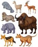 Tipo diferente de animais selvagens ilustração royalty free