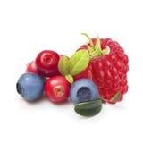 Tipo diferente de frutos de baga isolados Imagem de Stock Royalty Free