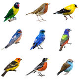 Tipo diferente de pássaros Foto de Stock