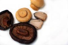 Tipo do cogumelo Imagem de Stock