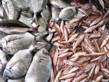 Tipo dois de peixes frescos Fotografia de Stock