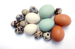 Tipo dos ovos Fotos de Stock Royalty Free
