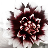 Tipo florido de dia Fotografia de Stock