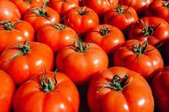 Tipo grande do fruto de muitos tomates vermelhos frescos Fotografia de Stock