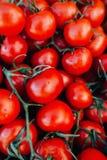 Tipo grande do fruto de muitos tomates vermelhos frescos Fotos de Stock Royalty Free