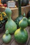 Tipo insolito di Lagenaria della zucca su un contatore di legno Zucca verde su una tabella di legno Zucca per una festa Immagini Stock Libere da Diritti