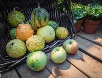 Tipo inusual de calabaza en la cesta en un contador de madera Calabaza y manzana verdes en una tabla de madera Calabaza por un dí fotografía de archivo libre de regalías