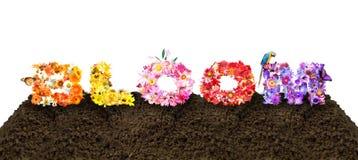 Tipografia da flor da flor Imagens de Stock Royalty Free