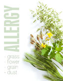 Tipos alérgicos de grama fotos de stock