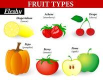 Tipos carnudos do fruto Fotografia de Stock