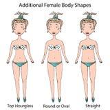 Tipos da forma do corpo fêmea Ampulheta superior, circularmente ou oval e em linha reta Mão realística esboço tirado do estilo da ilustração royalty free