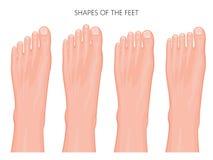 Tipos da pata dianteira e dos dedos do pé Fotos de Stock Royalty Free