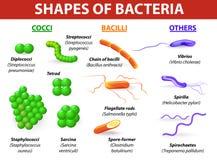 Tipos de bactérias Imagem de Stock
